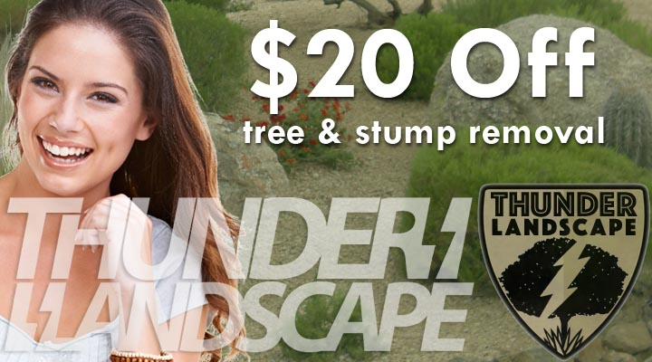 $20 Off Tree Stump Removal